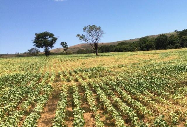 Quebra da safra argentina estimula a alta nas cotações