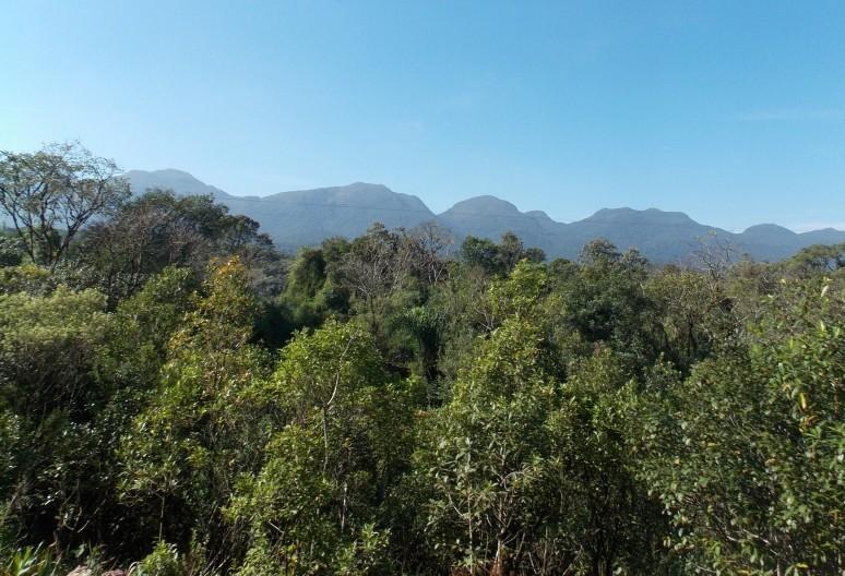 Legado das Águas: projeto prevê manutenção da floresta em pé