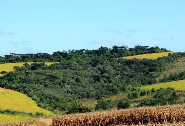 Preservação ambiental em propriedades rurais custa R$ 20 bi ao ano