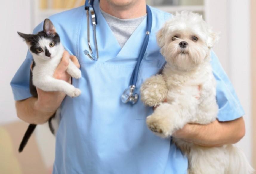 Protetores independentes defendem a criação de um SUS para pets