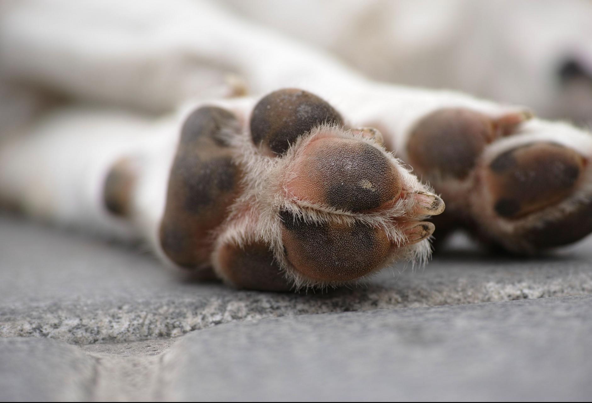 Riscos da picada de escorpião nos pets