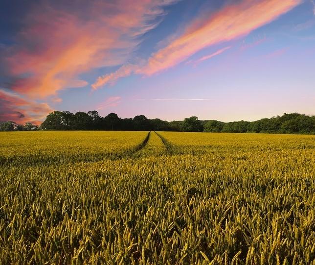 Especialista em crédito rural responde pergunta de produtor endividado