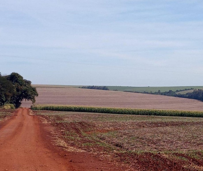Vazio sanitário da soja começa em 10 de junho, alerta Agricultura