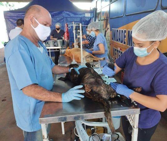 Castrações de cães e gatos serão reagendadas para final de setembro