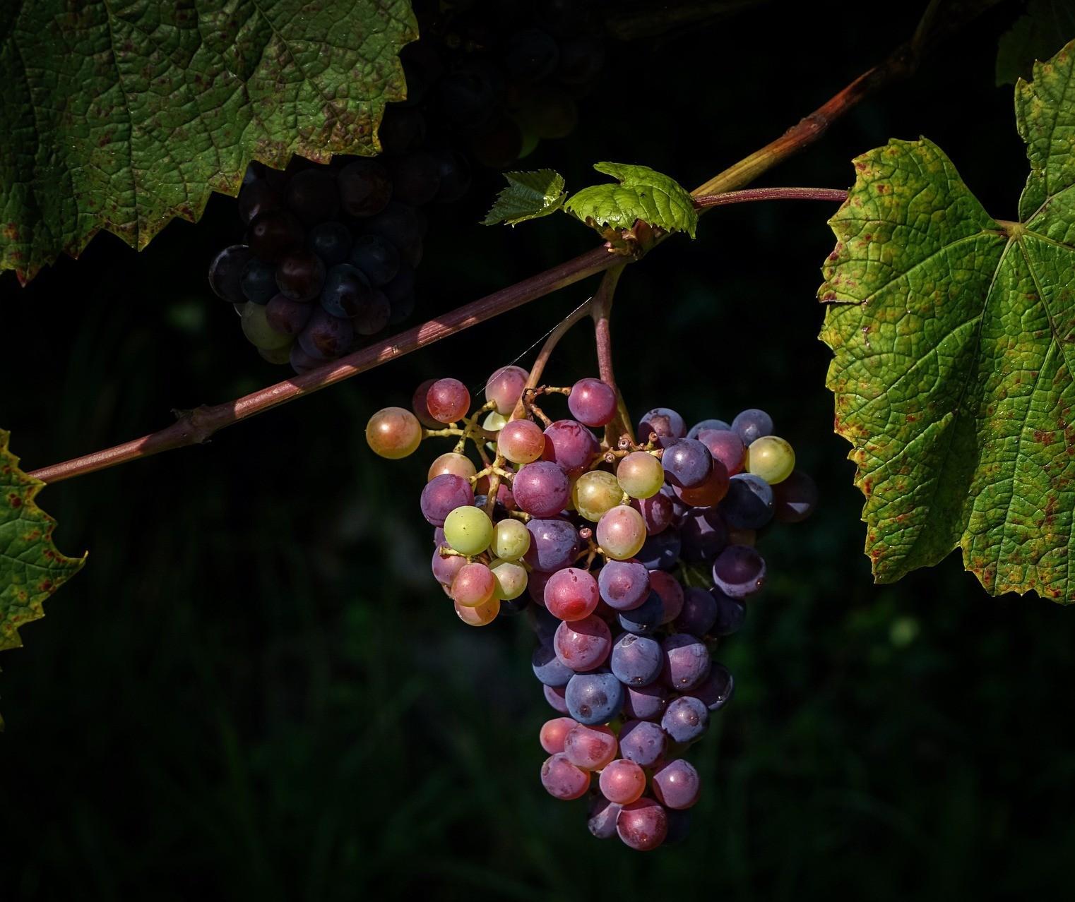 Artistas que resolveram entrar para o mundo dos vinhos