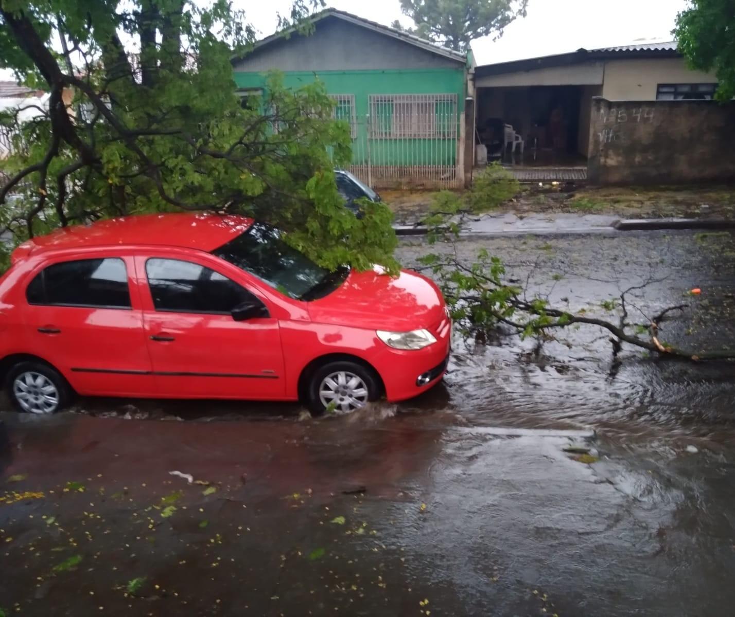 Temporal derrubou 119 árvores em Maringá