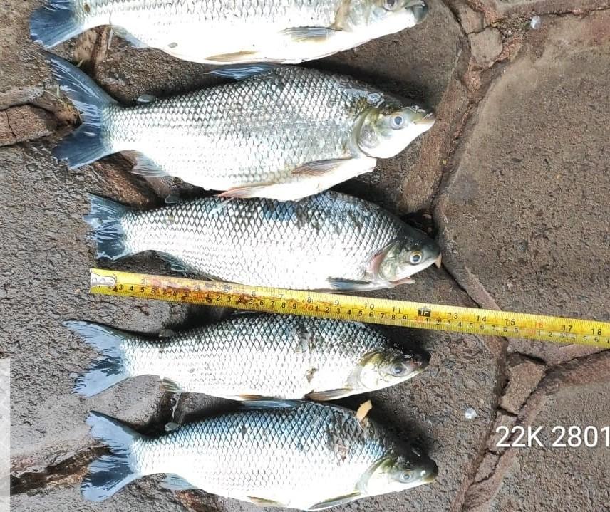 Três pescadores são presos na Operação Hórus