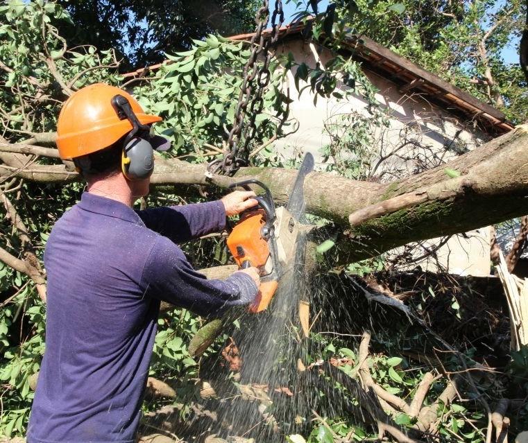 Vereadores cobram a contratação de mais técnicos para avaliar a saúde das árvores em Maringá