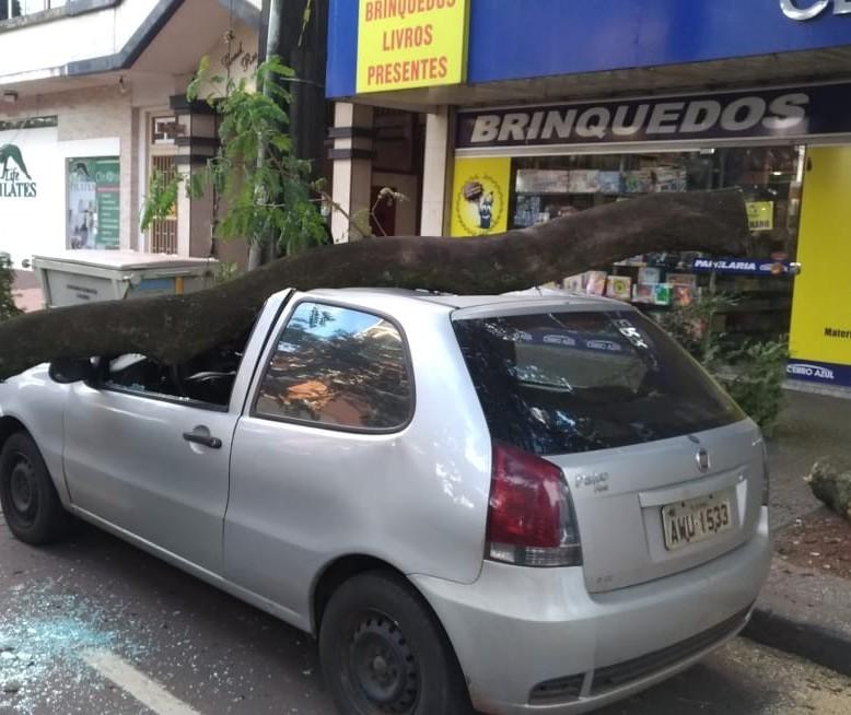 Galho cai sobre veículo em Maringá