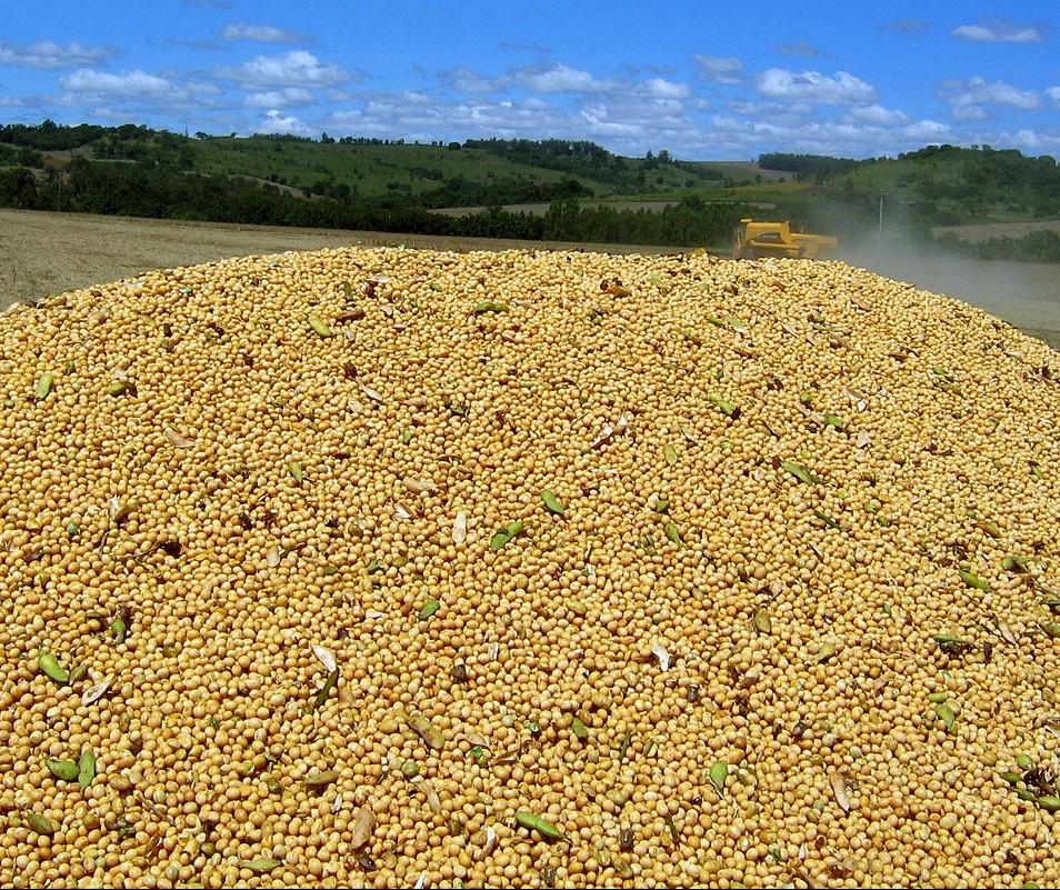 Preço da saca da soja custa R$ 74,50