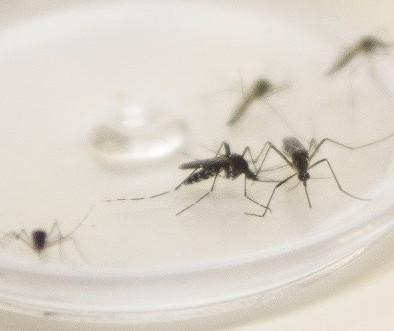 Secretaria de Saúde do Paraná confirma primeira morte por dengue em Maringá