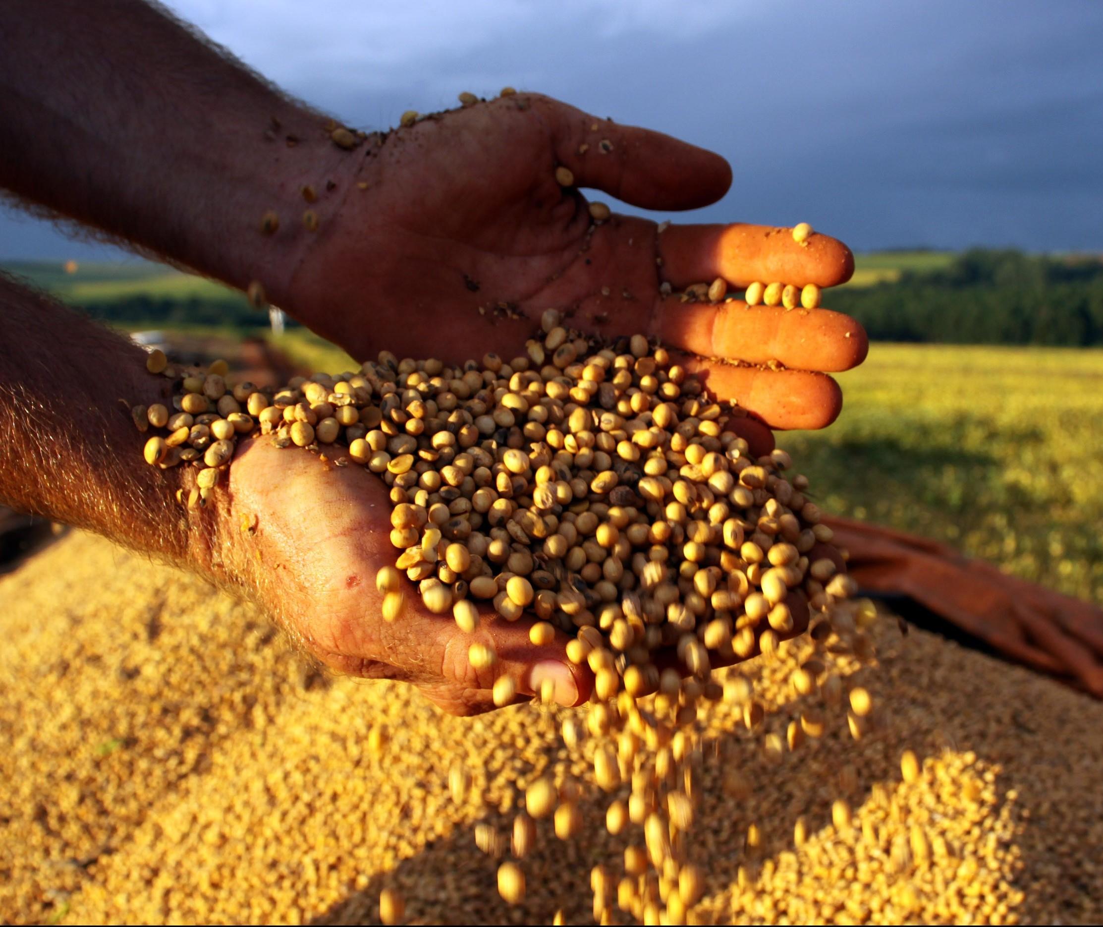 Safra de soja 2017/18 deve atingir 114 mi de toneladas