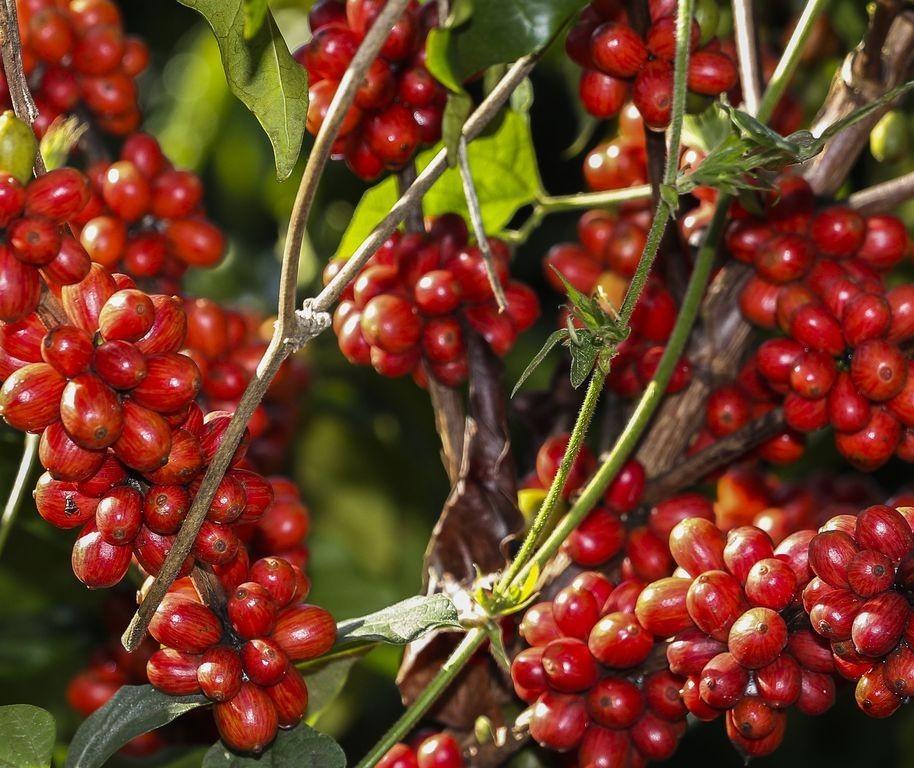 Clima quente e seco no Norte do estado tem ajudado colheitas