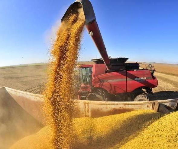 Preços da soja fecham semana em queda na Bolsa de Chicago