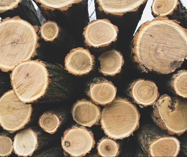 Produtos florestais brasileiros são destaque nas exportações