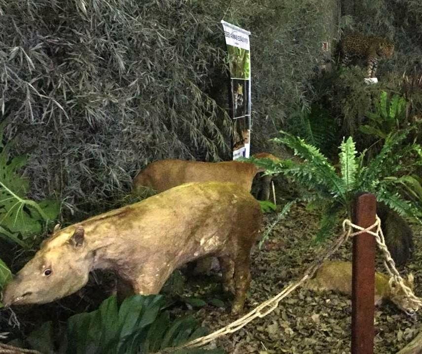 Polícia Ambiental monta museu de animais taxidermizados na Expoingá