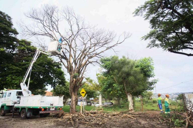 Maringá tem 14 mil pedidos para cortes de árvores
