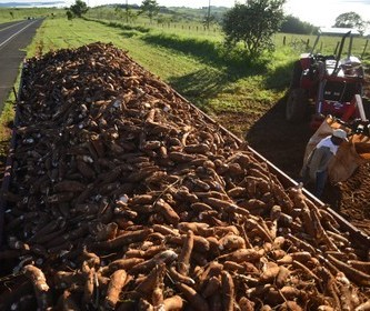 Indústria de fécula de mandioca sofre efeitos de paralisação dos caminhoneiros
