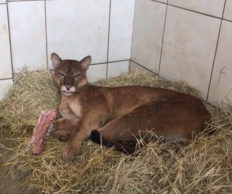 Veterinária de animais silvestres atende de onça a cobra; Fotos