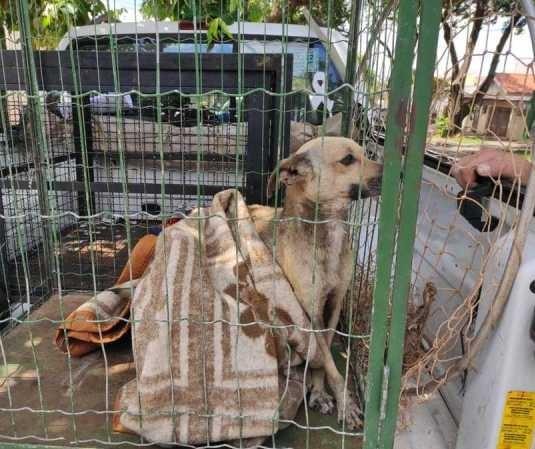 Homem é multado em R$ 12 mil por maus-tratos a cães em Maringá