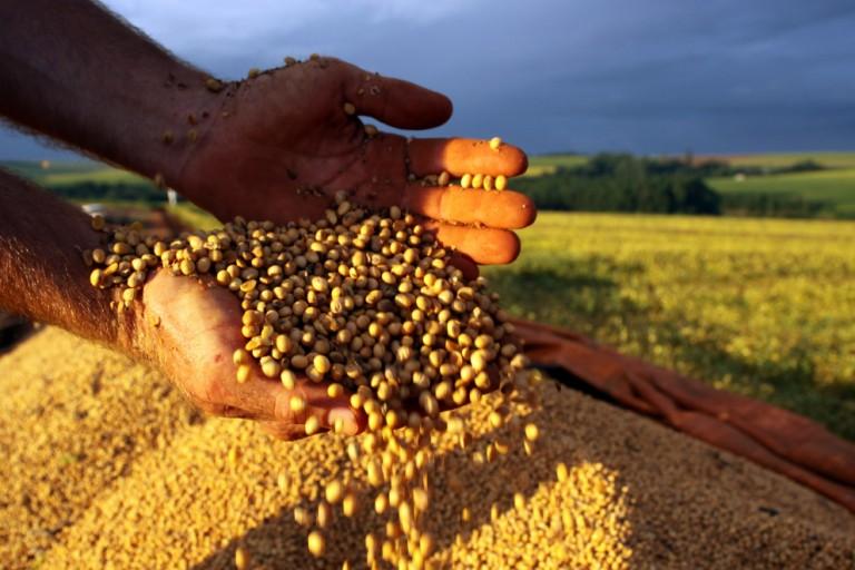 IBGE reduz previsão para safra agrícola em 2021