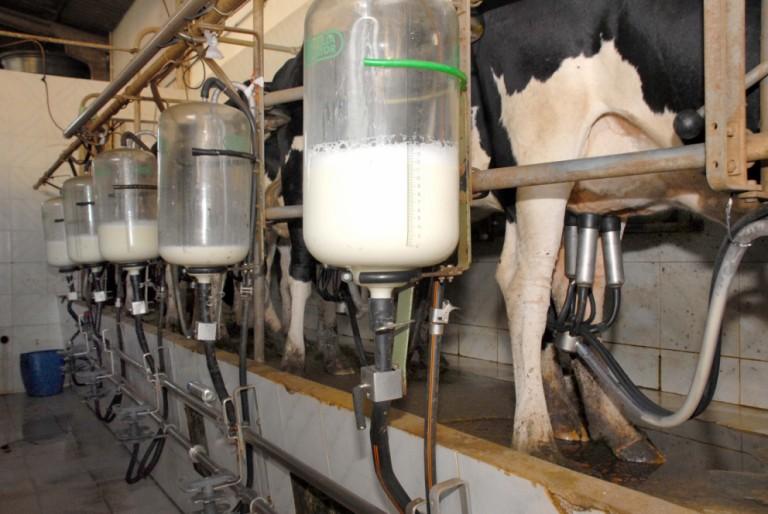 Preço do leite pago ao produtor sobe 9,5%