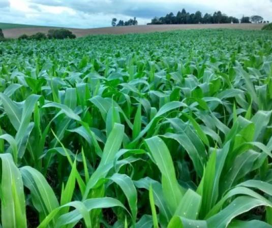 PIB agropecuário deve crescer 2,4% em 2020