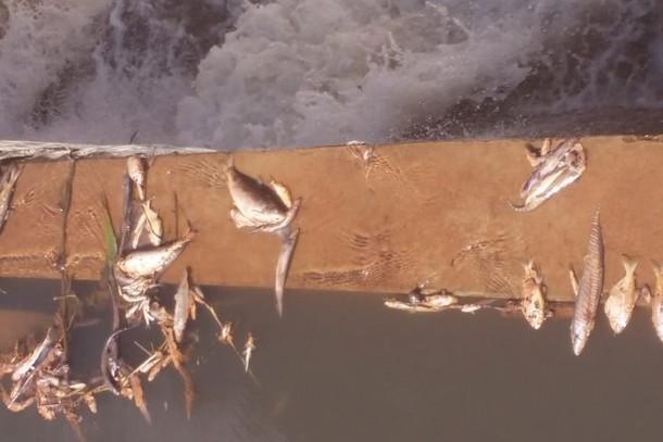 Farinheira é multada em R$ 60 mil por poluir rio e causar morte de peixes