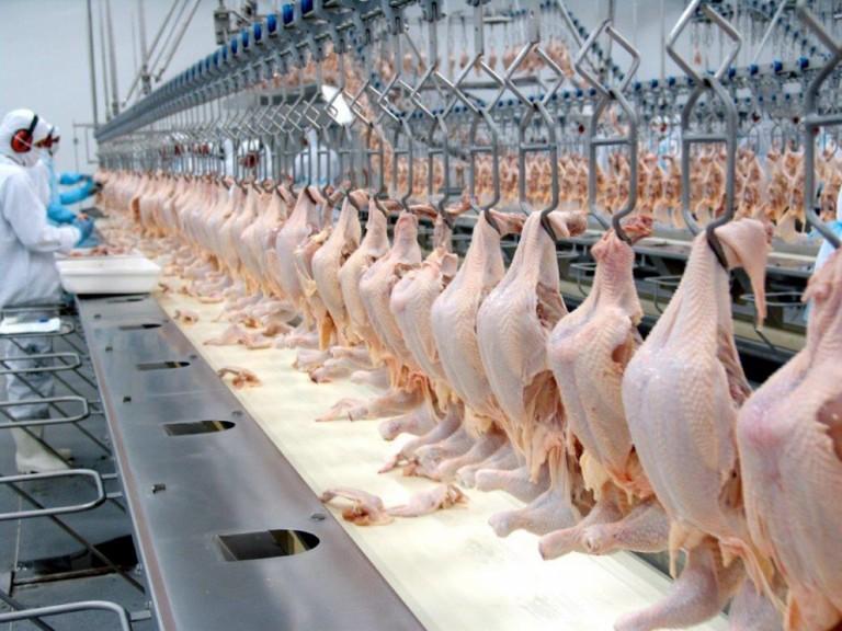 Custo de produção do frango está em queda desde julho de 2016