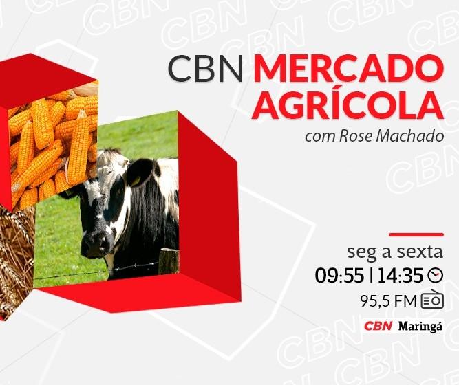 Vaca gorda custa R$ 265 a arroba em Londrina