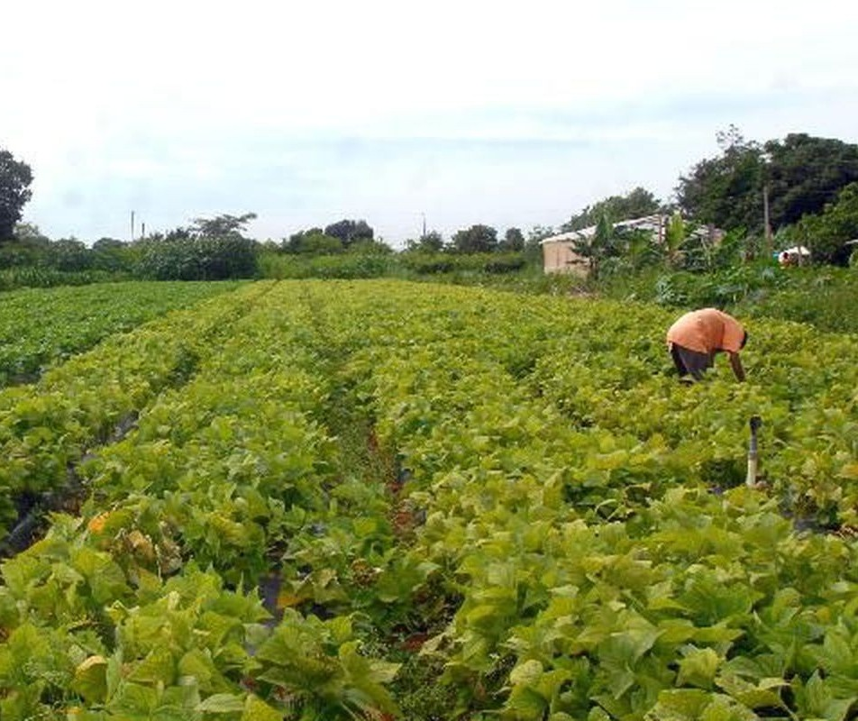 Mapa vai substituir DAP por novo cadastro de agricultores