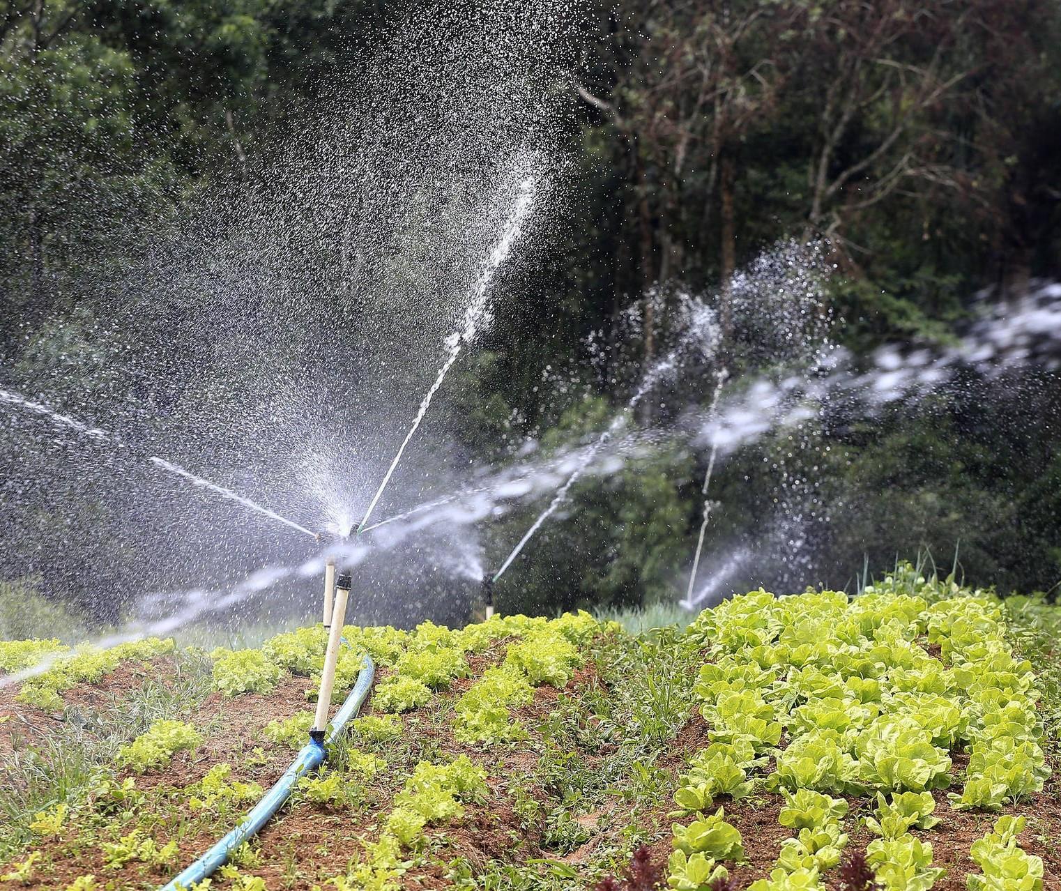Falta de chuvas afeta trabalho de pesquisadores