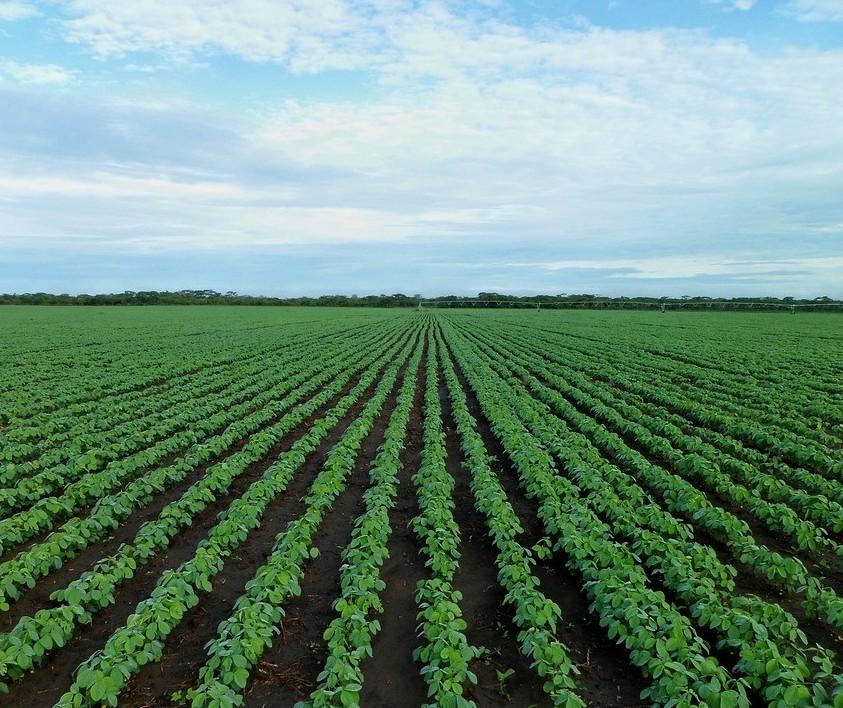 Crédito Rural: mais de R$ 59 bilhões já foram aplicados até setembro