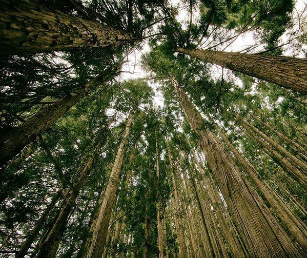 Paraná tem uma das gestões de florestas mais eficientes do Brasil