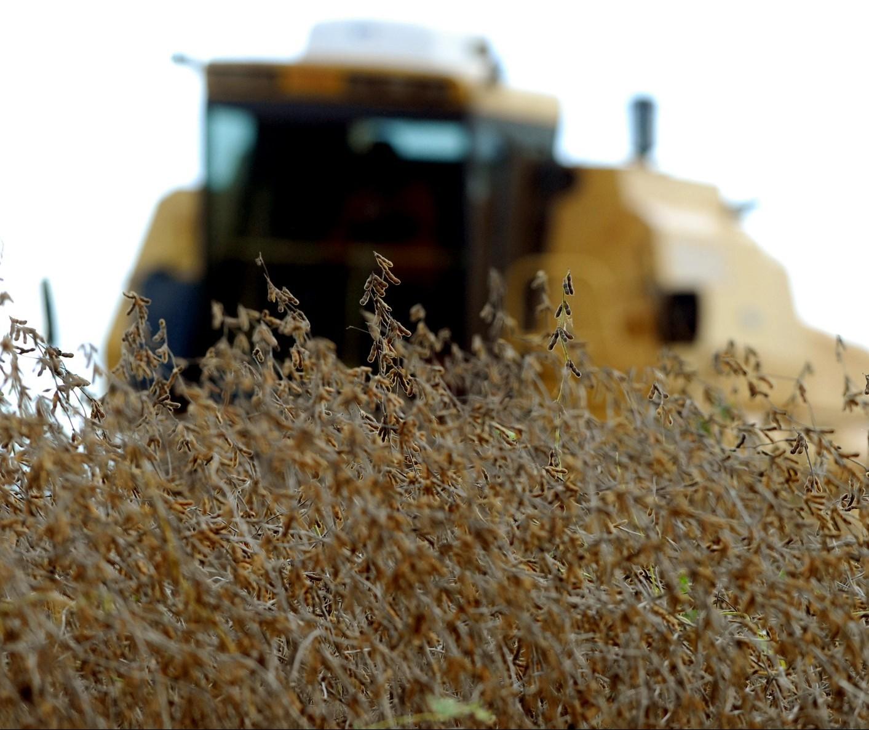 Semana começa com preços da soja em baixa na Bolsa de Chicago