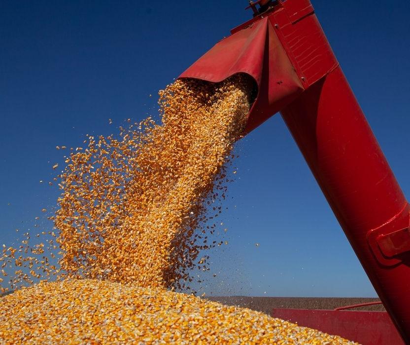 Governo zera impostos incidentes na importação de milho