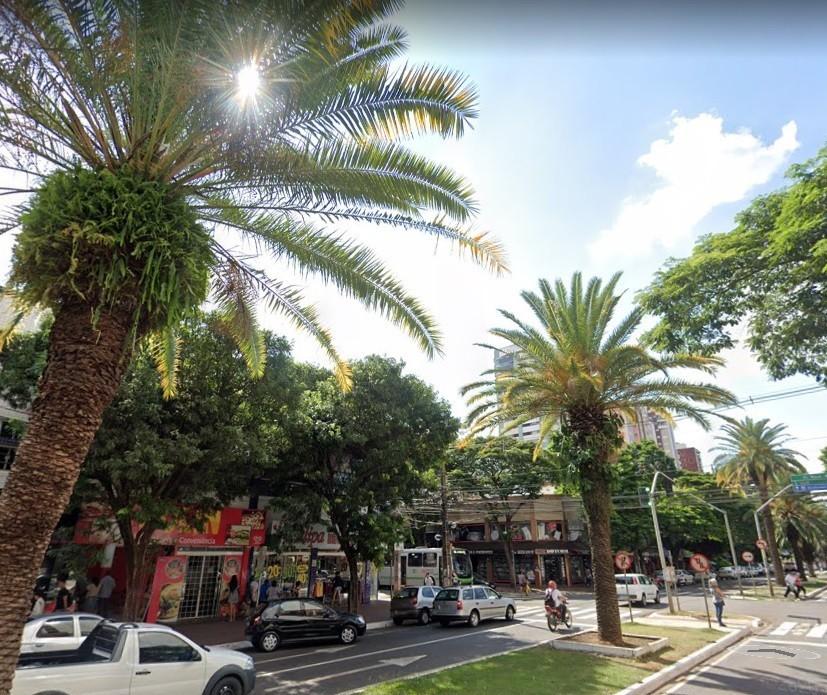 'Floresta urbana' de Maringá cria identidade visual e chama atenção pela beleza