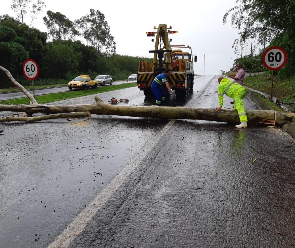 Árvore cai na pista e provoca congestionamento na BR-376