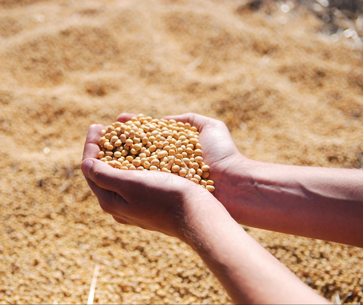 Soja: Stonex eleva previsão de produção no Brasil em 2020/21 para 133,91 milhões de toneladas