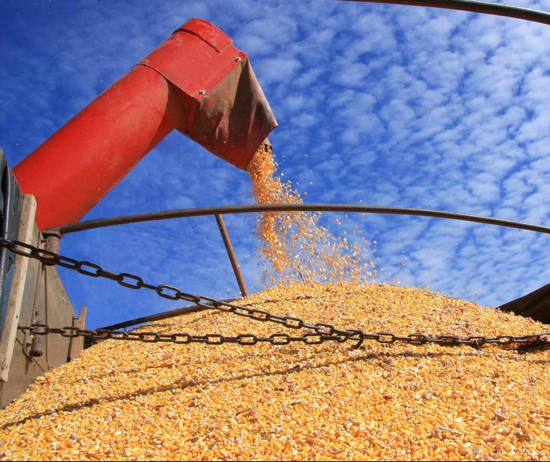 Brasil deve colher 119 milhões de toneladas de soja