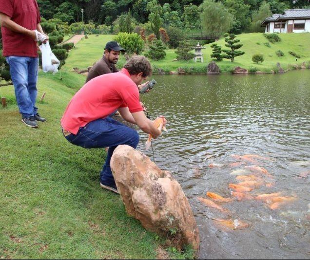 Carpas são transferidas no Parque do Japão