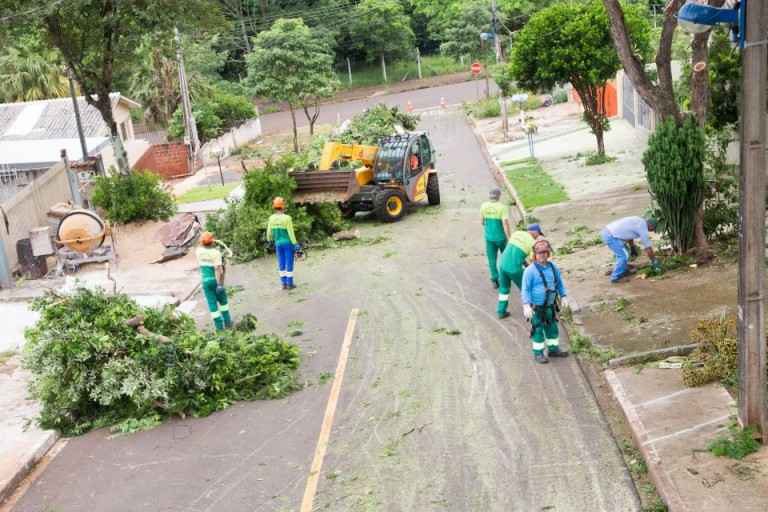 Maringá tem 3 mil árvores aguardando corte