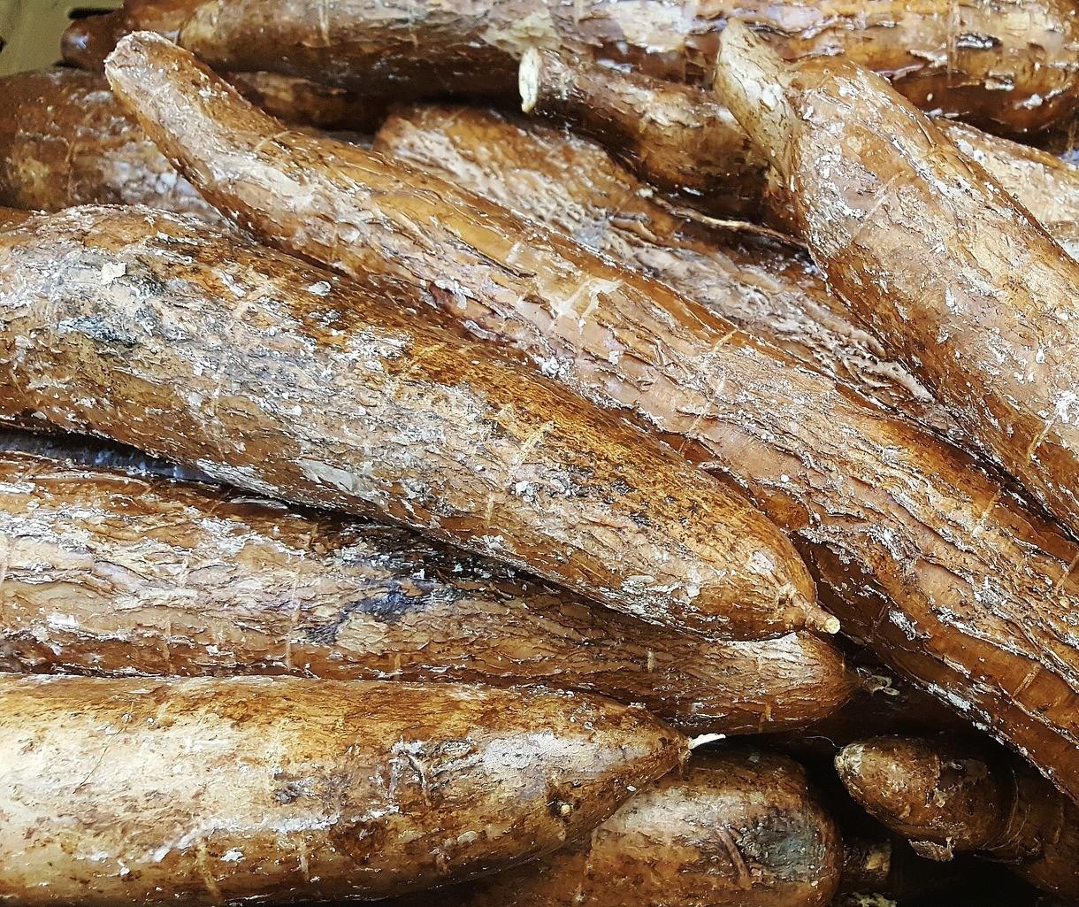 Raiz de mandioca custa R$ 325 a tonelada em Umuarama