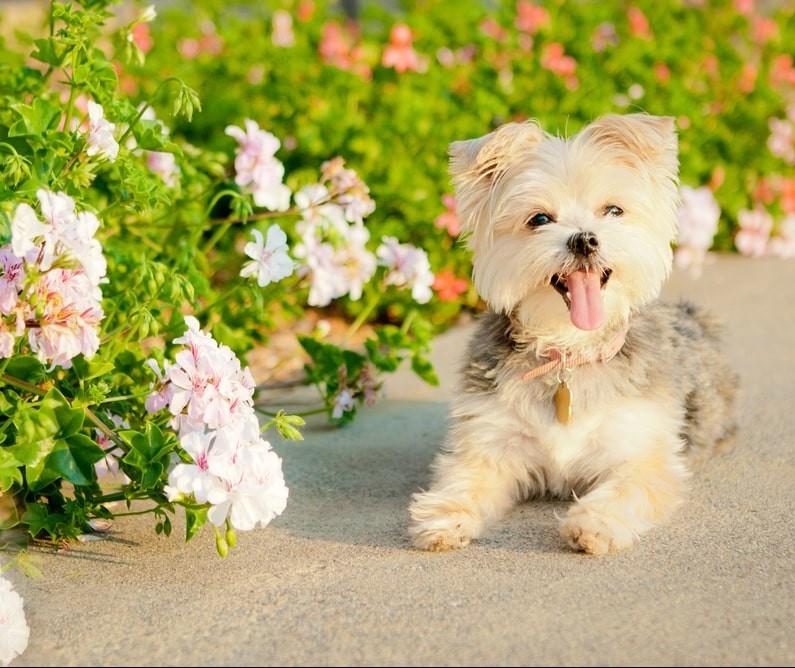 Primavera aumenta a incidência de alergia nos pets; saiba como prevenir