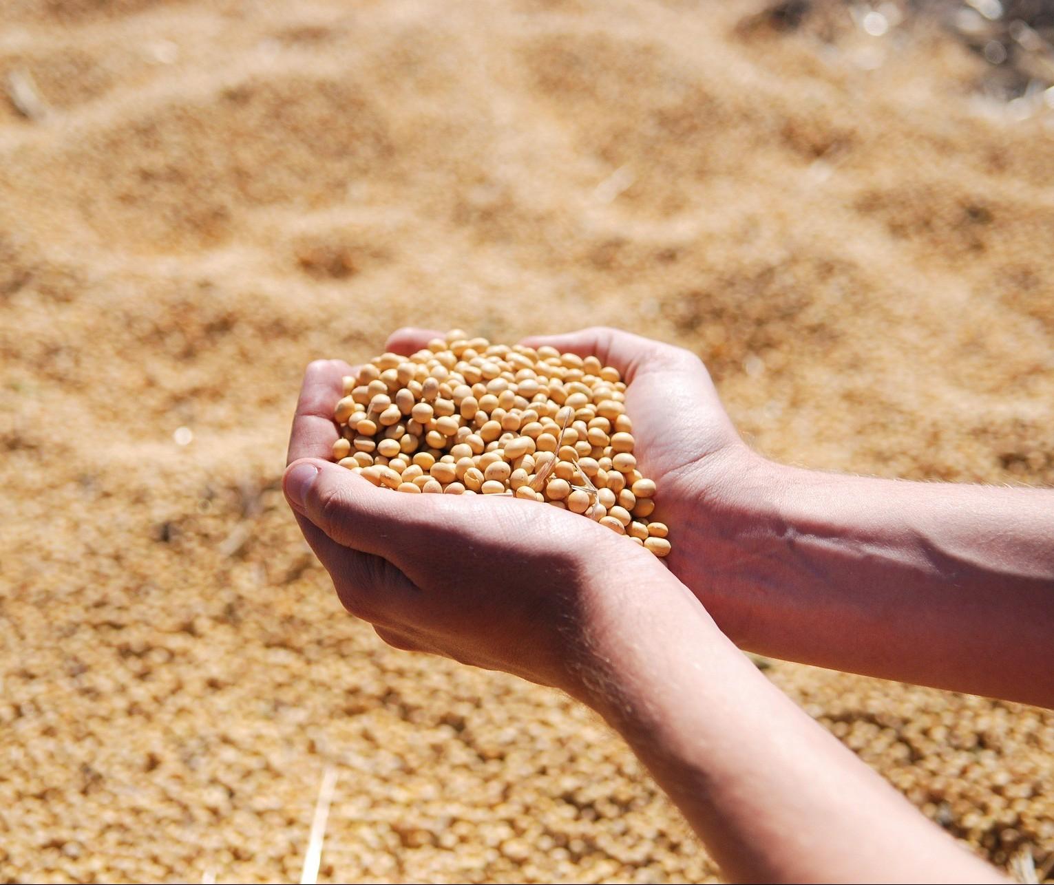 Portos do Arco Norte embarcaram 34% da soja e 31% do milho entre janeiro e agosto