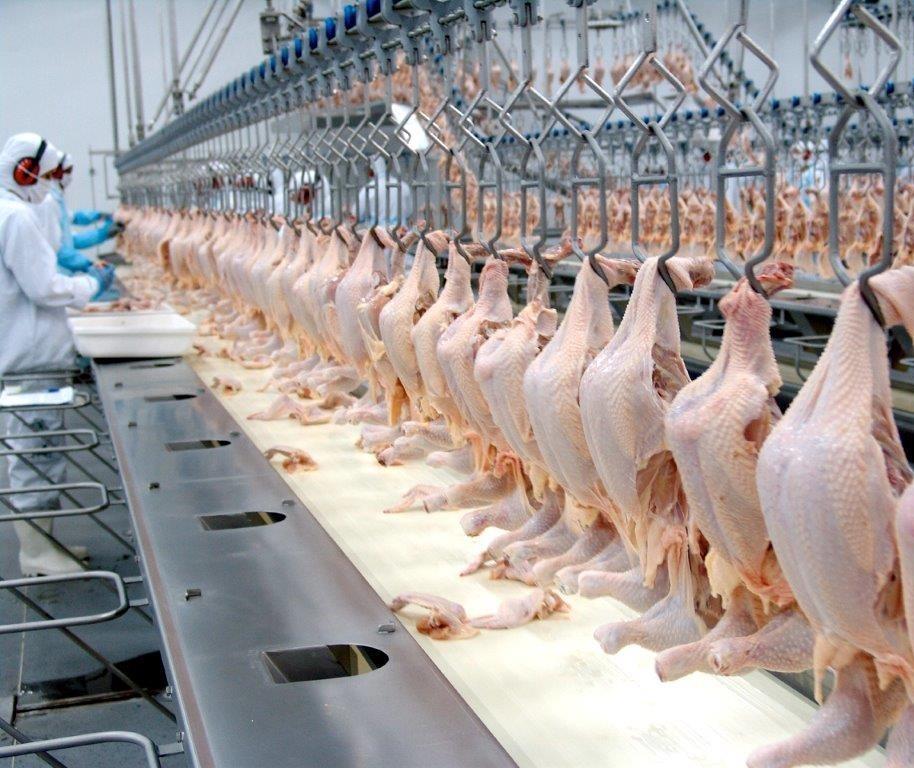 Abate de frango tem queda de 23,5% no Paraná