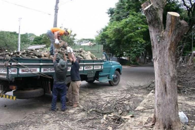 De 2017 até o momento, 12 mil árvores foram cortadas em Maringá