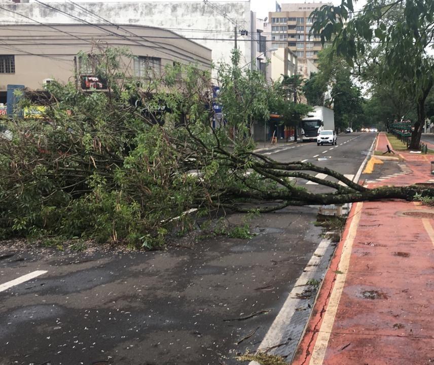 Temporal derruba mais de 40 árvores em Maringá