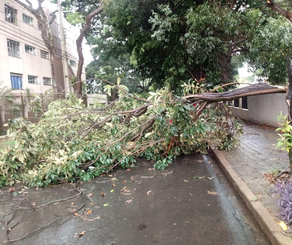 Chuva rápida derrubou três árvores em Maringá