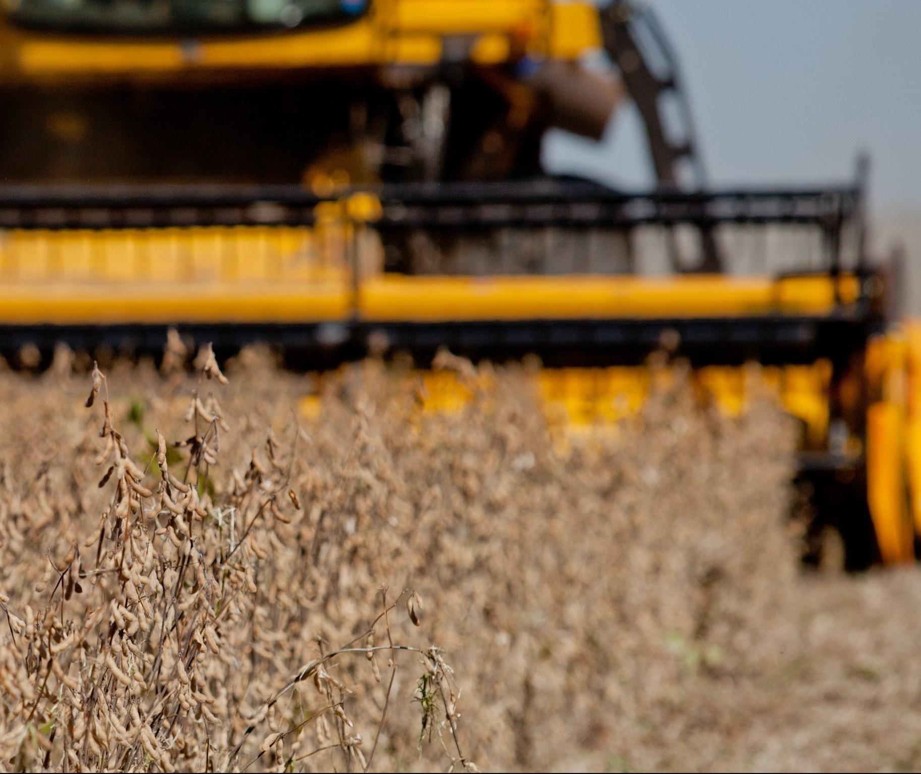 Cepea: soja tem preço recorde e opera acima dos R$ 100 em Paranaguá